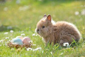 Hyvää pääsiäistä toivoo Levanto!